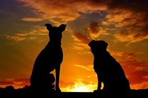 two dogs silhouetted against sunset